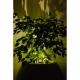 Donica Parga XL 100x52 Kama Flower